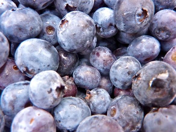Michigan Blueberries