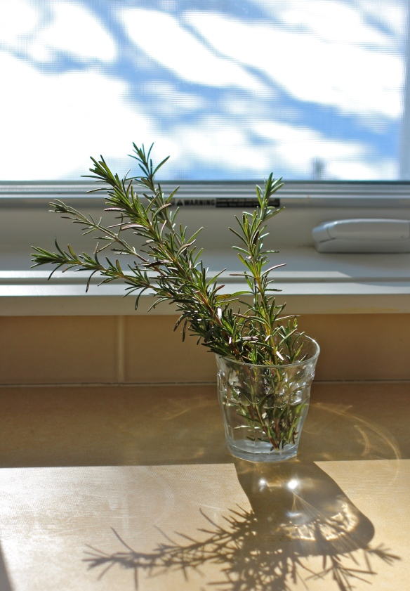 Rosemary Rescued from the Snow