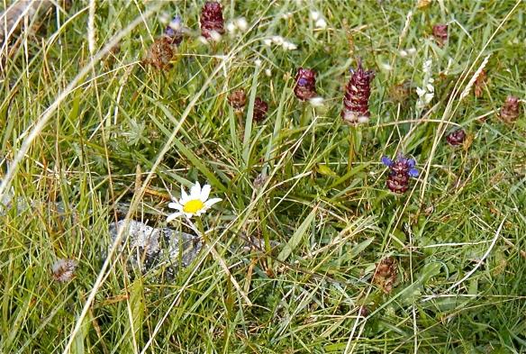 Wildflowers Among The Rocks