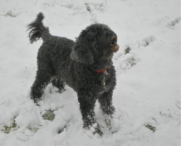 A Romp in a Rare Snowfall - Inkberrow, England